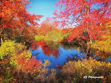 Colorful pond