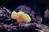 Coral marine animal corals 0