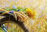 Bike, bunch of wild flowers, ears of cereals