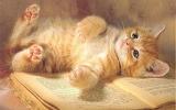 Cute-Kitten-Wallpaper-kittens-16094692-1280-800