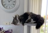 My Pole Dancing Cat