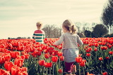 Netherland,tulips and children