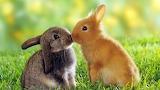 Kissing-small-rabbits-animals