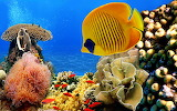 6783259-coral-reef-wallpaper