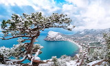 Sea-coast-trees-snow-winter-nature-landscape-Crimea