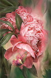 Pink Peony Butterfly