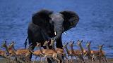 Wildlife in Botswana Africa