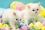 Fairy Floss Kitties
