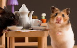 Rodents Hamsters Cup 465464 1920x1200