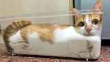 Cat squared