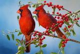 ☺♥ Northern Cardinal pair...