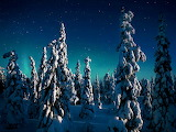 CandleSpruces_Finland