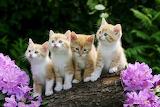 Cute-baby-cats-wallpaper