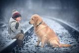 Dogs Golden Retriever Winter Railroads Marianna 570624 1280x853