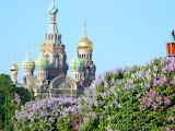 Сирень в Санкт-Петербурге