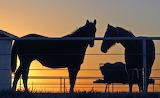 Last Sunset In Oklahoma