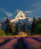 Places - Oregon - Mt Hood