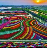 Tulip Heaven, NL