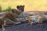 Lion Cubs ~ Masai Mara, Kenya