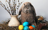 Bunny-And-Easter-Eggs