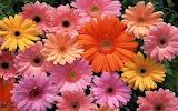 Pastel flowers for Kurta