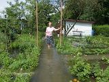 Hochwasser Dresden 2013 im Garten