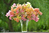 Summer Flowers Snapdragons