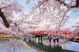 Springtime n the Orient