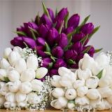 448_448_510729_flowers