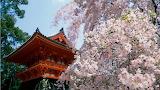 Japan-delightful-scene