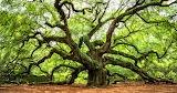 400 year old Angel Oak