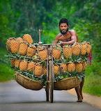 Pineapple Vendor - Bangladesh