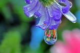 Beauty in a drop