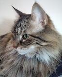 Seymore the cat