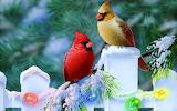 Christmas Cardinals...