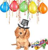 Happy New Year @ northdevonvets.co.uk...