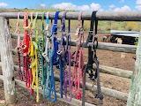 Rainbow of halters