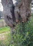Handsy tree