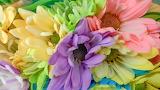 ^ Pastel Spring Flowers