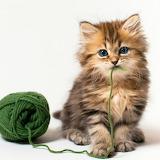 Tasty Wool...