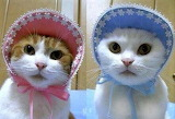 Cats In Bonnets