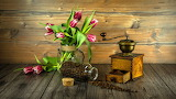 ^ Still life coffee grinder and tulips