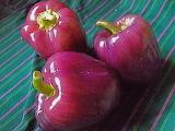 ^ Purple bell pepper