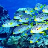 *Ocean Fish...