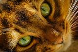 ☺ Green eyes...