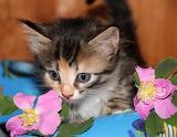Kitty & flowers