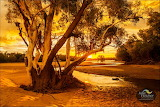 Julie Fletcher Photography Fitzroy River Fitzroy Crossing