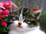 Cats-and-Kittens-Wallpapers-12
