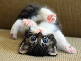 Flexible Kitten...