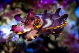 Animals Cephalopod 1
